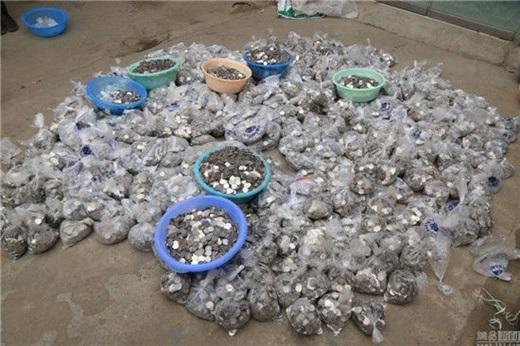 Lúc phóng viên nhìn thấy đốngtiền xukhổng lồnày của ông Trương, số tiền đềuđã được nhân viên sắp xếp xong xuôi, mỗi túi nilon nhỏ đựng 500 đồng tiền.(Nguồn News.163.com)