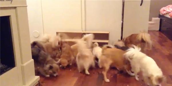 Choáng với cảnh cả bầy cún con ăn cùng một lúc
