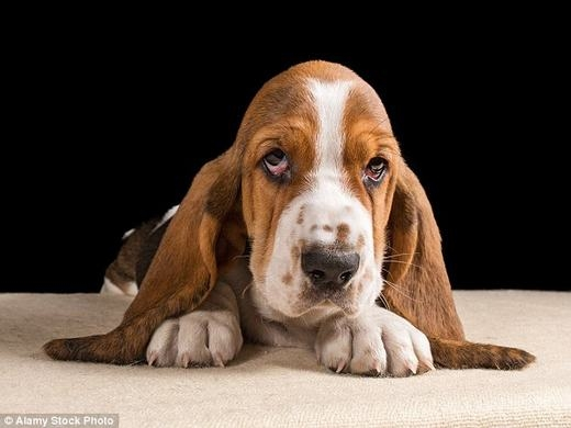 Chó là người bạn thân thiết nhất của con người.(Ảnh: Internet)