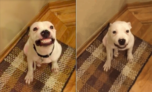 """""""Mãi giữ lấy nụ cười đó nhé, Herbert!"""" (Ảnh: Internet)"""