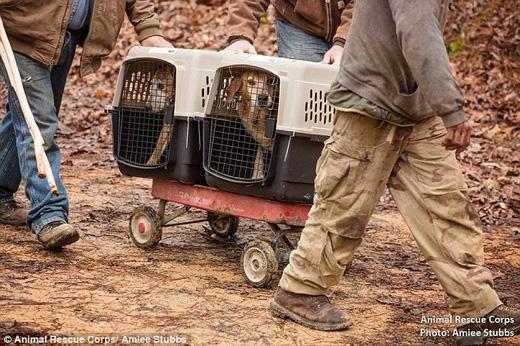 Tổ chức Giải cứu Động vật đã yêu cầu chính quyền không bắt phạt ông. (Ảnh: Daily Mail)