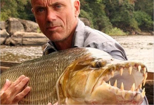Con mồi nào chẳng may rơi vào tầm mắt chú cá này chỉ có nằm yên chịu chết. (Ảnh: Internet)
