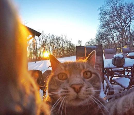 Chú mèo này có tên Manny, sống cùng chủ và bầy chó trên một mảnh đất xinh đẹp ở nước Mỹ. (Ảnh: buzzfeed)