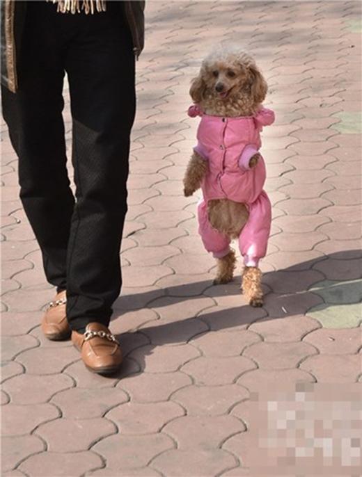 Barbie xinh xắn trong bộ đồ màu hồng, tự tin sải bước cạnh chủ. (Ảnh: Internet)