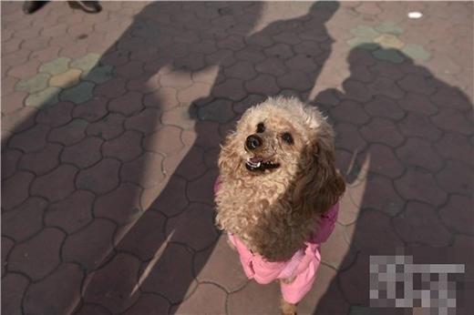 Dù mất một chân trái trước, Barbie vẫn rất lạc quan, yêu đời và luôn cười thật tươi. (Ảnh: Internet)