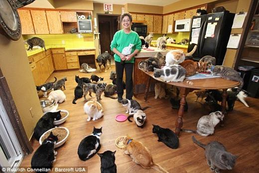 Bà cùng nhóm của mình hiện đang chăm sóc hơn 1.000con mèo. (Ảnh: Daily Mail)