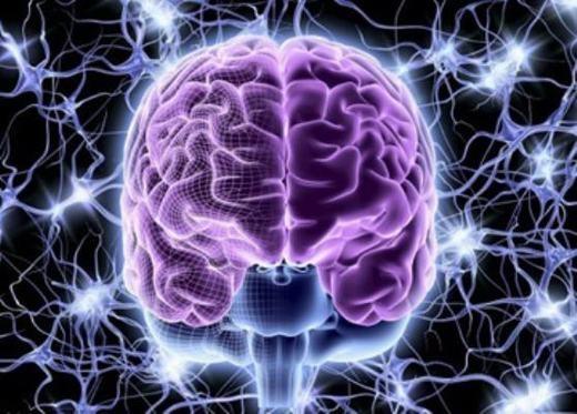 Não là cơ quan rấtphức tạp. (Ảnh: Internet)
