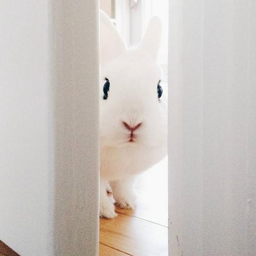 """""""Ra đây chơi nào! Ở đây có bánh quy và những bạn thỏ xinh xắn lắm."""" (Ảnh: bunnzilla)"""