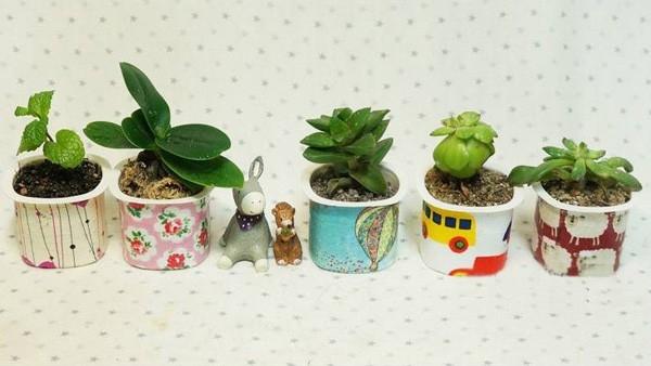 Những chậu cây nhỏ được làm từ hộp sữa chua. (Ảnh: Internet)