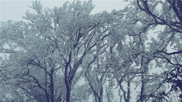 Hình ảnh được chụp tại Cao Bằng vào trưa ngày 23/1. (Ảnh: Internet)