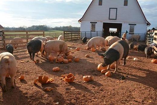 """""""Thánh địa"""" của động vật vànhững gia súcbị bỏ rơi(Ảnh: Internet)"""