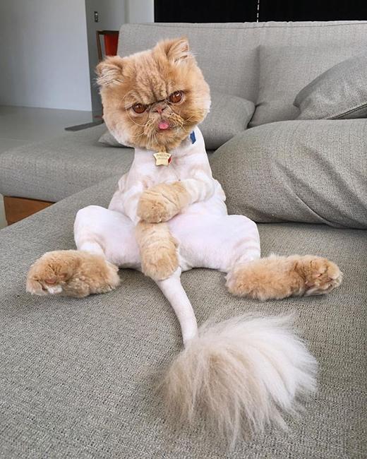 Hình ảnhnổi tiếng nhất của Winston chính là dáng ngồi thòng lưng. (Ảnh: Internet)