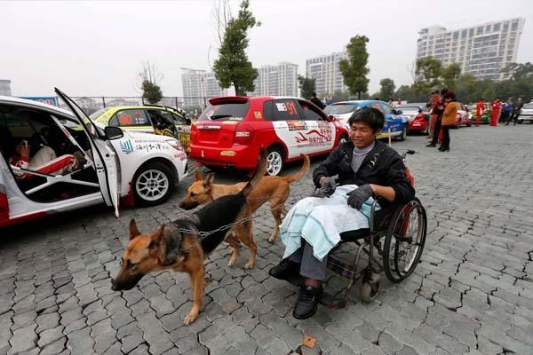 Ảnh chụp đôi chó trung thành kéo xe lăn giúp Phương Kiến Quốc đi xem một cuộc thi tổ chức ngày 9/11/2013.
