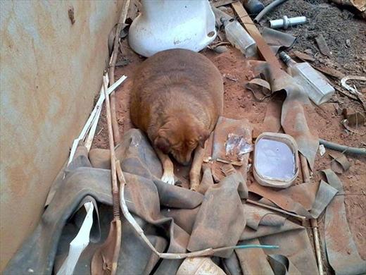 Bolinha sống trong đống đổ nát phía sau trạm xăng, ai cho gì ăn nấy nên ăn vô tội vạ. (Ảnh: Internet)