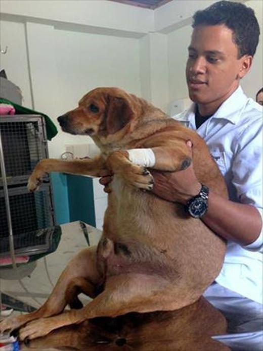 Bolinha cũng được các bác sĩ thú y tận tình chăm sóc. (Ảnh: Internet)