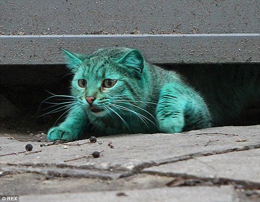 Cô mèo xanh lá trở thành hiện tượng mạng khi được phát hiện ở Varna, Bulgaria. (Ảnh: Internet)