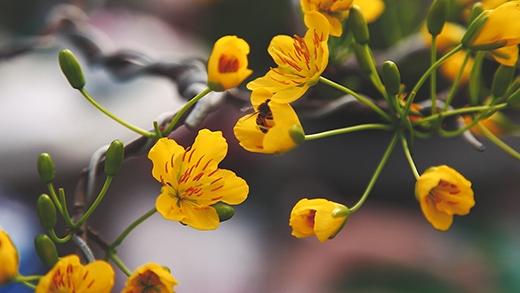 Những điều bạn chưa biết về chợ hoa xuân Bến Bình Đông