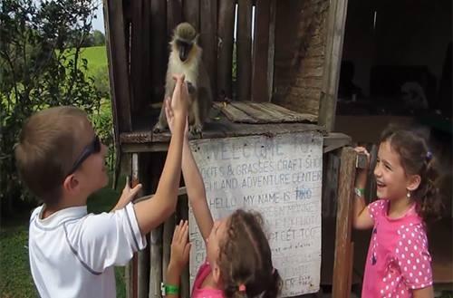Mở đầu năm khỉ bằng những chú khỉ cực