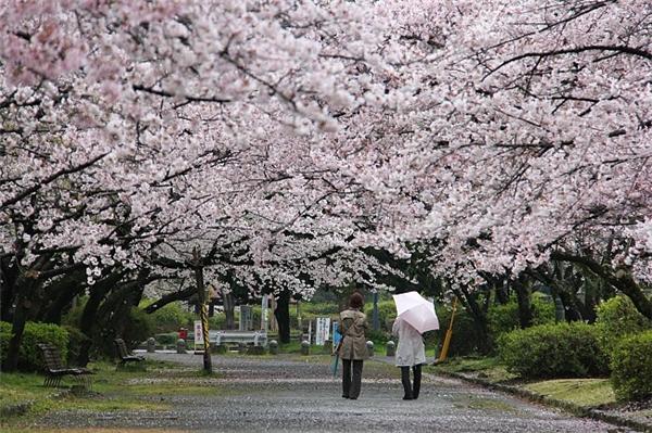 Thành phố Fukuoka gần thủ đô Seoul của Hàn Quốc hơn cả thủ đô Tokyo.(Ảnh: Internet)
