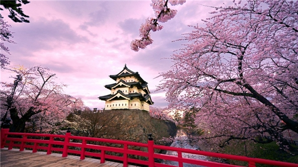 Osaka chợt lãng mạn và cổ kính nhờ sắc hoa anh đào. (Ảnh: Internet)