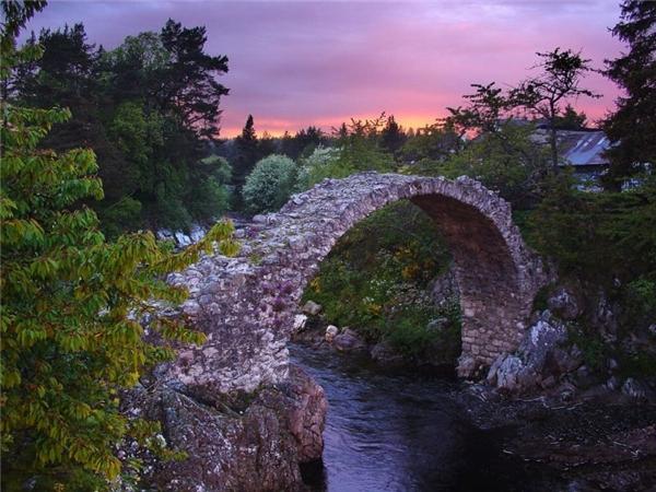 Những cây cầu
