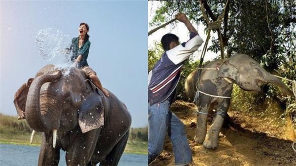 Thực tế không có nhân viên nào có đủ thời gian để hướng dẫn bạn cũng như dẫn dắt voi giỏi. Thế nên, đi cưỡi voi vào mùa cao điểm không như những gì bạn từng nghĩ đến. (Ảnh: Internet)