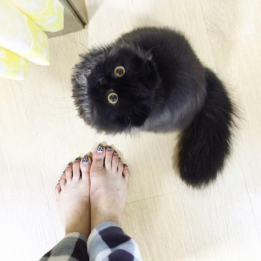 """""""Phát cuồng"""" trước chú mèo có đôi mắt tuyệt đẹp như hòn bi ve"""