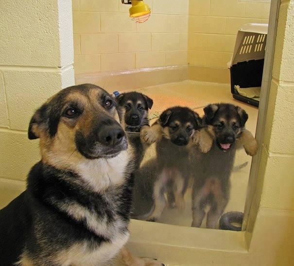 """""""Mẹ ơi, con hứa con chỉ ra ngoài ngó con mèo đó một chút xí thôi rồi con về liền, thả con ra đi mẹ!"""". (Ảnh: Internet)"""