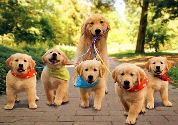 """""""Cùng đi dạo thôi nào!""""(Ảnh: Internet)"""