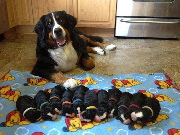 """""""Đi siêu âm bác sĩ bảo em sẽ có cả tá con, thế mà sinh ra đếm mãi chỉ có 11 đứa thôi mới kì lạ chứ!"""" (Ảnh: Internet)"""