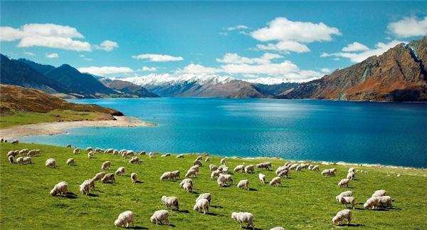 Thiên nhiên New Zealand thì không còn chỗ nào để chê: trong lành, hoang sơ và yên tịnh.(Ảnh: Internet)