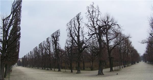 Đây là những cây thật 100% những đã được cắt tỉa. (Ảnh: Reddit)