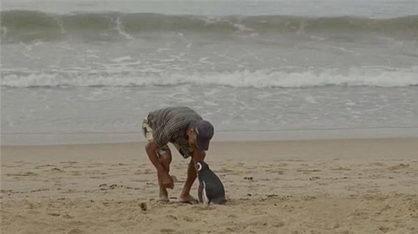 Ông Joao – một ngư dân 71 tuổi, đã cứu chú chim cánh cụt tình nghĩa này vào năm 2011.(Ảnh: Internet)