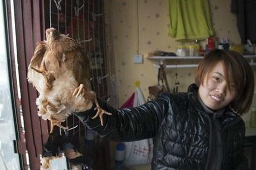 Con gà lạ ban đầu vẫn rất khỏe mạnh. (Ảnh: Internet)