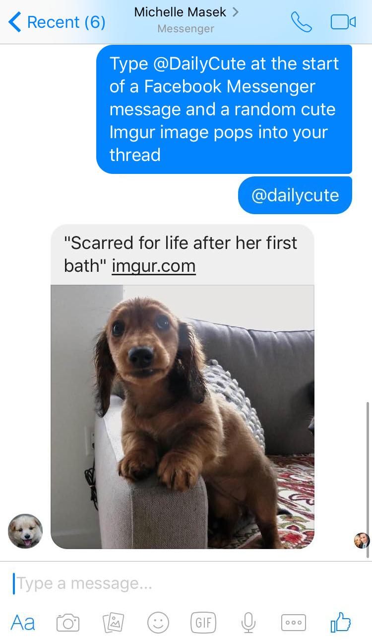 Còn nếu bạn gõ @dailycute, một hình ảnh về thú cưng bất kì sẽ được gửi cho bạn của bạn. (Ảnh: Internet)