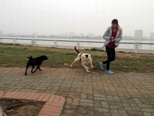 Gặp chú chó khác, một con Pitbull định lao vào tấn công nhưng được chủ giữ lại.