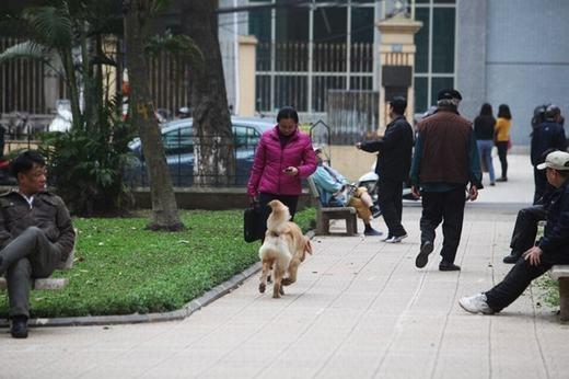 Chó không được rọ mõm đặc biệt nguy hiểm tại những nơi đông người