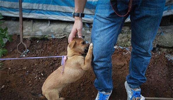 Chú cún đáng thương này không hề biết cuộc sống của nó sắp chấm dứt khi vừa được sống không bao lâu. (Ảnh: Internet)