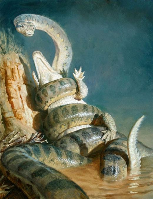 Rắn cổ đạiTitanoboacóchiều dài tối đa 15 mét và nặng gần đến 1.200kg.(Ảnh: Internet)