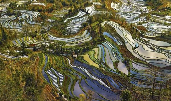 Kết thúc mùa gặt, từ giữa tháng 9 đến giữa tháng 11, những bậc ruộng luôn đầy ắp nước cho tới mùa cấy vào tháng 4 năm sau. Những mảng nước trong ruộng tạo thành những chiếc gương đa chiều, trong suốt khi nhìn từ trên cao xuống.(Ảnh: Internet)