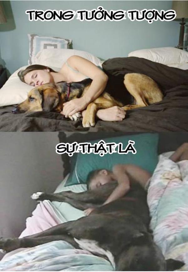 Mong rằng mình và chú cún cưng sẽ nằm yên trên giường nhưng cuối cùng thì lại thành ra thế này đây. (Ảnh: Internet)