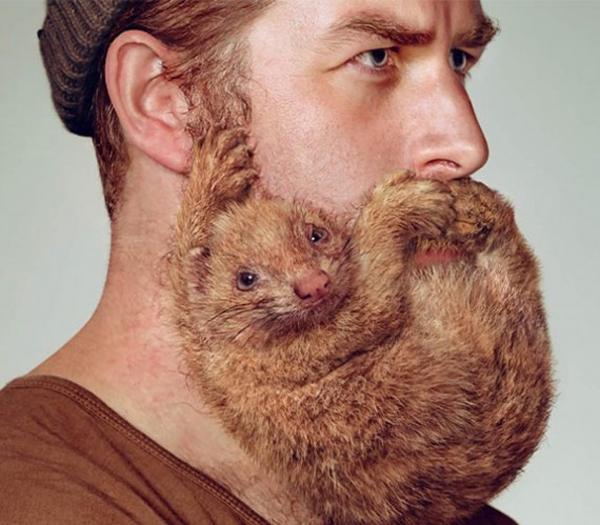 1. Đừng hiểu lầm, đấy chỉ là một bộ râu thôi mà.
