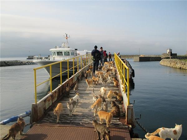 Mèo ở các đảo mèo được ngư dân trên đảo đem đến để diệt chuột. (Ảnh: Internet)