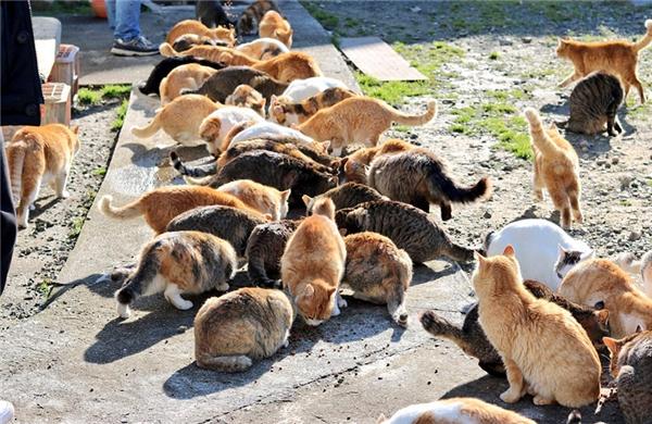 Khi các đảo mèo trở nên nổi tiếng và được nhiều du khách ghé thăm, cuộc sống của lũ mèo trở nên sung túc hơn hẳn và chúng cũng béo múp míp hơn. (Ảnh: Internet)