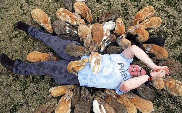 Bước chân lên đảo là bạn đã bước chân vào thế giới của hơn 1000 con thỏ đủ loại. (Ảnh: Paul Brown)