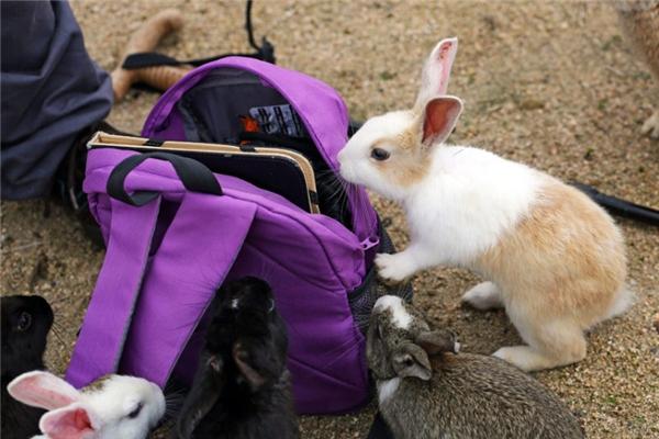Các du khách có thể mua thức ăn cho thỏ ngay trên đảo. (Ảnh: Paul Brown)