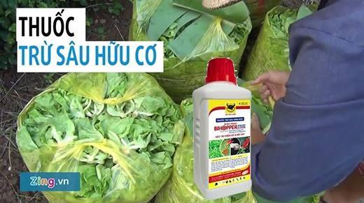 Tác hại của hóa chất tồn dư và cách chọn rau củ sạch, bạn biết chưa?