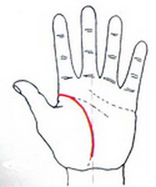 Đường sinh đạo cong vòng, ôm sát vào ngón tay cái là người hướng về quê hương. (Ảnh: Internet)