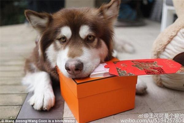 Coco được anh chủ ưu ái tặng cho một phong bì dày cộm tiền vào ngày Lễ Tình nhân vừa qua. (Ảnh: Vương Tư Thông)