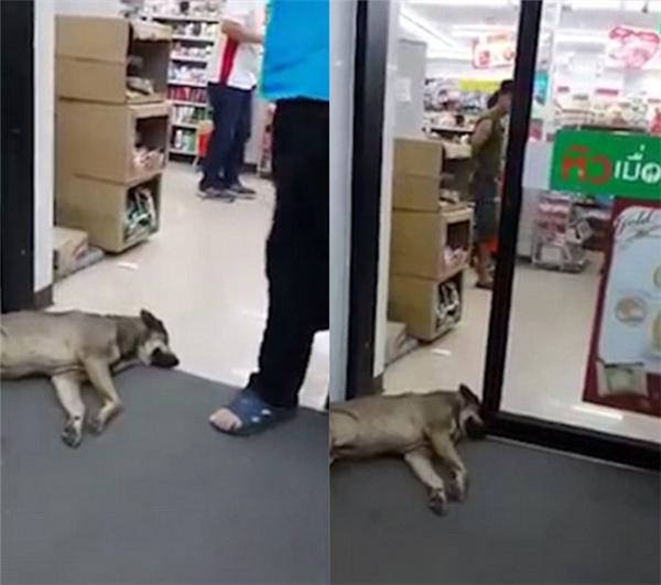 Một số người đi qua đều né chú chó. (Ảnh: Internet)